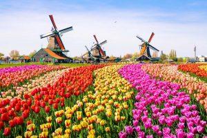 Viaggio-ad-Amsterdam