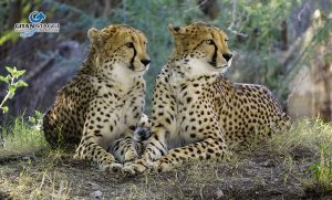 Parco-Naturale-di-Ngorongoro-safari-tanzania