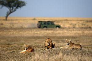 Parco-Nazionale-del-Serengeti