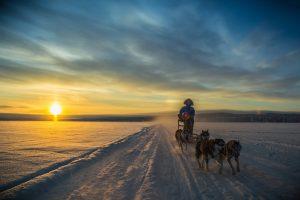 escursioni-in slitta-cani-Husky