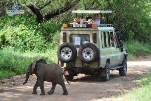 safari-Parco-Nazionale-del-Manyara-tanzania