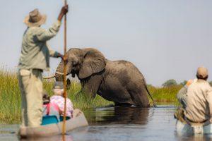 Botswana-Elefante-Chobe-National-Park