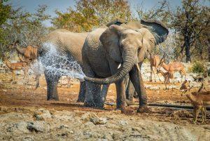 Gli-elefanti-di-Damaraland-Namibia
