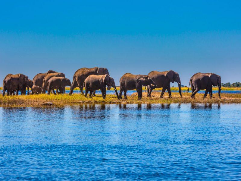 Safari-in-Botswana