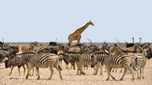 animali-di-Etosha-national park-namibia