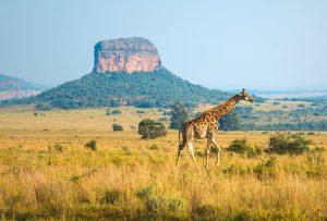 escursioni-in-sudafrica